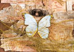 Abstract composition of butterflies, birch bark and straw Stock Photos