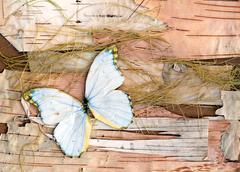 Abstract composition from butterflies, birch bark and straw Stock Photos