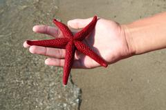 Starfish in Hand - stock photo