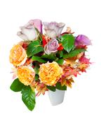 colorful autumn flower bouquet arrangement centerpiece in vase isolated on wh - stock photo