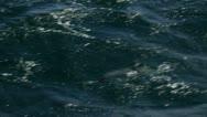 Antarctica, Hourglass Dolphins Stock Footage