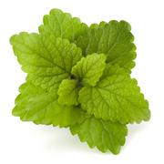 peppermint or  mint bunch - stock photo