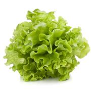 fresh lettuce salad leaves bunch - stock photo