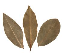 aromatic bay leaves - stock photo