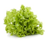 Fresh lettuce salad leaves bunch Stock Photos