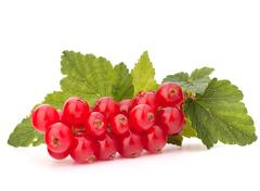 red currants and green leaves still life - stock photo