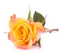 Stock Photo of orange rose