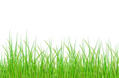 raster. grass - stock photo