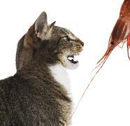Cat attack Stock Photos