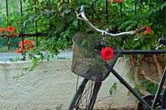 Red rose in basket of old rusty bicycle - stock photo