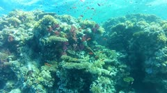 RedSea 03 - The Alternatives Stock Footage