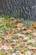 Puunrunko lähikuva lehdet nurmikolla Kuvituskuvat