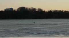 A bird flying over an icy lake Stock Footage