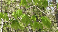 Stock Video Footage of Full HD: Green leaves