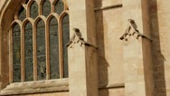 Stock Video Footage of Bath Abbey detail