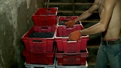 Loading boxes with grapes in the cellar of the winery Stock Footage