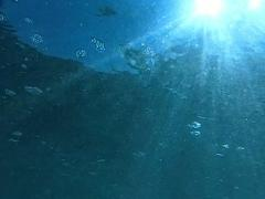 Underwater Ocean HS30 Slow Motion 240fps Stock Footage