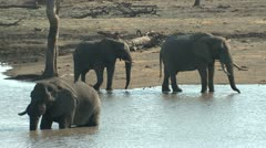 P02170 Elephants at Water Hole at Kruger National Park Stock Footage