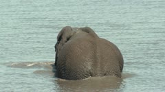 P02179 Elephant Submerging in Water Stock Footage