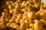 Stock Photo of Pile of Tiny Pumpkins