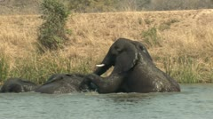 P02196 Elephants Playing in Water at Kruger National Park in Africa Stock Footage