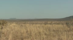 P02199 Pan of Kruger National Park Savannah - stock footage