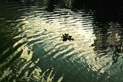 Dark water Stock Photos