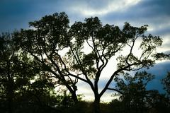 Stock Photo of trees silhouette at sunset