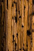 Aged Wooden Mesquite Board Wild West Look in Desert Stock Photos