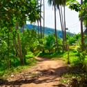 Stock Photo of road in jungle