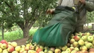 Stock Video Footage of Apple harvest
