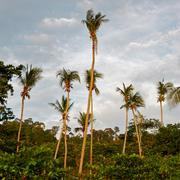 tropic jungle - stock photo