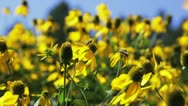 Bees and Flowers in the Wind Stock Footage