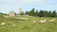 Stock Video Footage of Chipping-campden-sheep