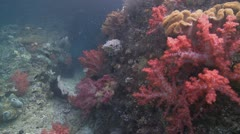 Colorful Soft Coral and Reef - stock footage