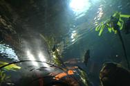 Aquarium abstract Stock Photos