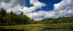 new england marsh & lily pond - stock photo