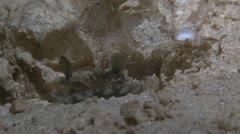 Marine Hermit Crab & Jellyfish Stock Footage