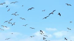 Seagulls and sky Stock Footage