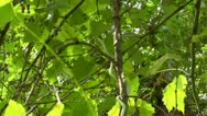 Amid Nature - Rough Green Snake Stock Footage