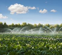 irrigation systems in a vegetable garden - stock photo