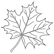 Leaf of a maple, contour Stock Illustration