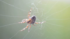 spider in a web - stock footage
