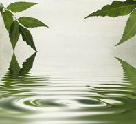 green leaves reflecting in the water - stock illustration
