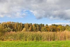 Stock Photo of autumn view with forest and rush meadow