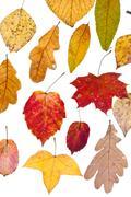 Stock Photo of deciduous autumn leaves