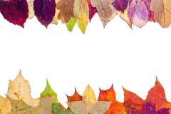 Stock Photo of two side frame from multicolored autumn leaves