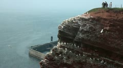 Bird watching at Helgoland Stock Footage