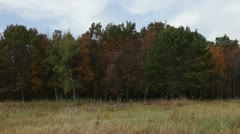 Blowing Prairie Grass with Fall Trees Stock Footage