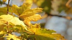 Mellow autumn Stock Footage